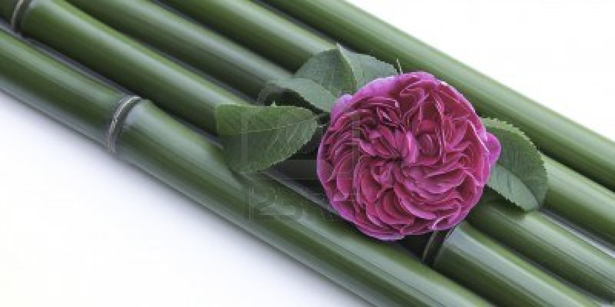 15503559-bamboo-stalks-and-pink-rose Kisah Inspiratif - kisah Bunga Mawar dan Pohon Bambu Cerita Inspirasi Cerita Motivasi Cerpen Inspiratif