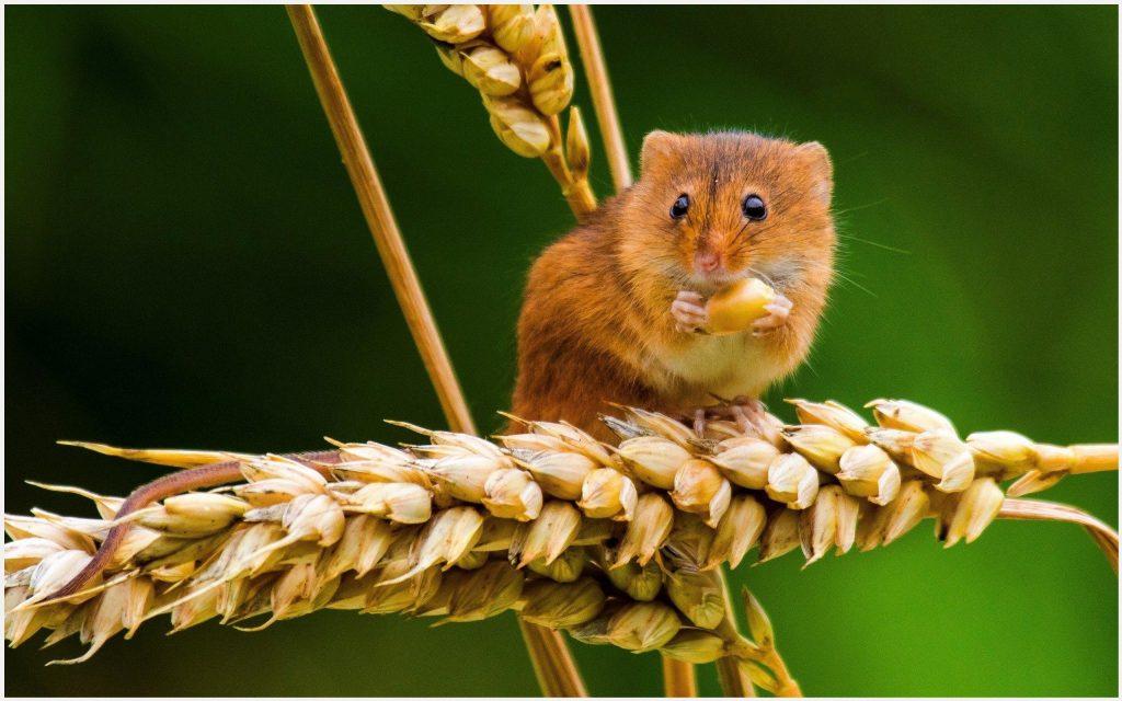 Kisah Inspiratif -Kisah Sang Tikus