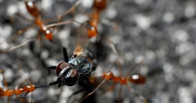 Semut-dan-Lalat Kisah Inspiratif - Kisah Semut dan Lalat Cerita Inspirasi Cerita Motivasi Cerpen
