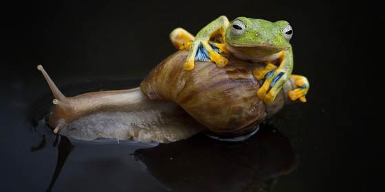 katak-dan-siput Kisah Inspiratif - Katak Dan Siput Cerita Inspirasi Cerita Mengharukan Cerita Motivasi Cerpen